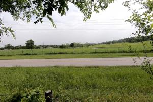 LARGE WOODED RANCHETTE HOMESITE- Tract 3 in Montgomery, TX (6 of 18)