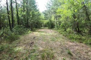 LARGE WOODED RANCHETTE HOMESITE- Tract 3 in Montgomery, TX (9 of 18)