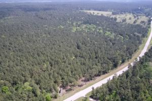 LARGE WOODED RANCHETTE HOMESITE- Tract 3 in Montgomery, TX (10 of 18)
