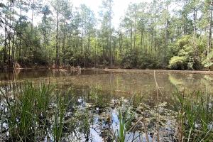 LARGE WOODED RANCHETTE HOMESITE- Tract 3 in Montgomery, TX (4 of 18)