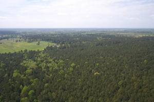 LARGE WOODED RANCHETTE HOMESITE- Tract 3 in Montgomery, TX (13 of 18)