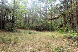 LARGE WOODED RANCHETTE HOMESITE- Tract 3 in Montgomery, TX (14 of 18)