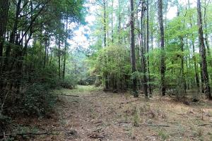 LARGE WOODED RANCHETTE HOMESITE- Tract 3 in Montgomery, TX (15 of 18)