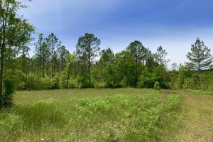 Dyas Road Recreational and Timber Investment Tract in Baldwin, AL (14 of 21)