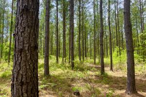 Dyas Road Recreational and Timber Investment Tract in Baldwin, AL (3 of 21)