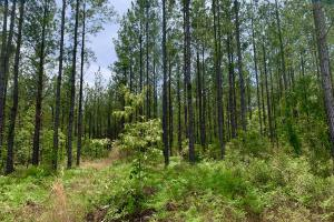Dyas Road Recreational and Timber Investment Tract in Baldwin, AL (11 of 21)