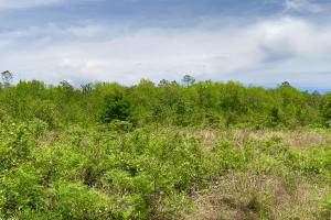 Dyas Road Recreational and Timber Investment Tract in Baldwin, AL (20 of 21)