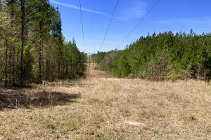 Dyas Road Recreational and Timber Investment Tract in Baldwin, AL (4 of 21)