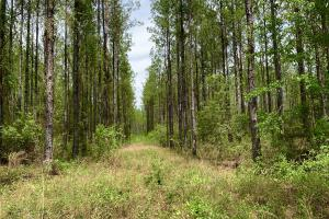 Dyas Road Recreational and Timber Investment Tract in Baldwin, AL (10 of 21)