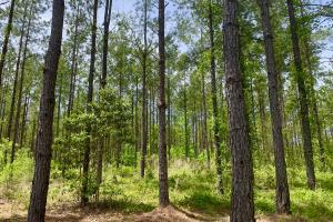 Dyas Road Recreational and Timber Investment Tract in Baldwin, AL (5 of 21)