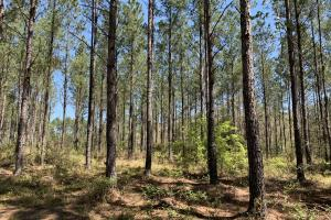 Dyas Road Recreational and Timber Investment Tract in Baldwin, AL (17 of 21)