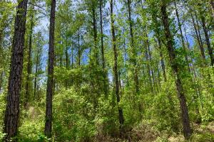 Dyas Road Recreational and Timber Investment Tract in Baldwin, AL (12 of 21)