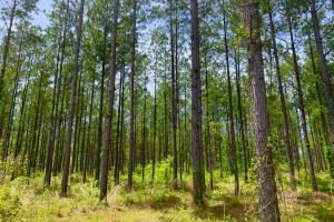 Dyas Road Recreational and Timber Investment Tract in Baldwin, AL (2 of 21)