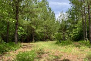 Dyas Road Recreational and Timber Investment Tract in Baldwin, AL (13 of 21)