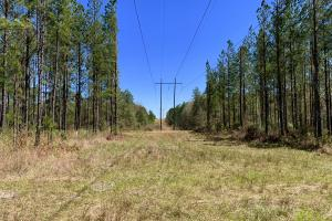 Dyas Road Recreational and Timber Investment Tract in Baldwin, AL (16 of 21)