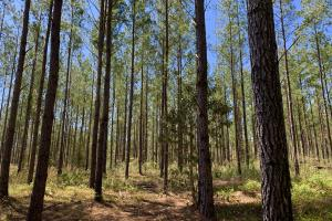Dyas Road Recreational and Timber Investment Tract - Baldwin County AL