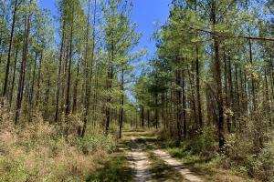 Dyas Road Recreational and Timber Investment Tract in Baldwin, AL (18 of 21)
