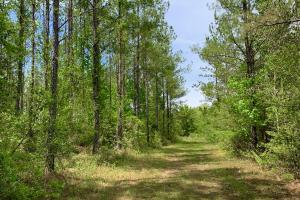 Dyas Road Recreational and Timber Investment Tract in Baldwin, AL (8 of 21)