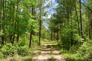 Dyas Road Recreational and Timber Investment Tract in Baldwin, AL (15 of 21)