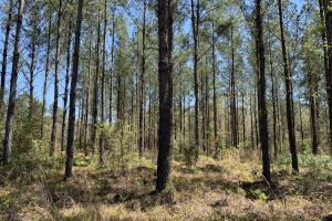 Dyas Road Recreational and Timber Investment Tract in Baldwin, AL (9 of 21)