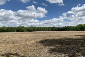 Wiggins Mill Farmland, Timber, & Hunting Property - Wilson County NC