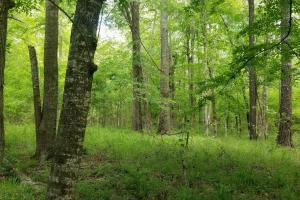 Stills Cross Roads Hunting, Timber, Potential Home Site  in Pike, AL (5 of 25)