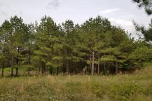 Stills Cross Roads Hunting, Timber, Potential Home Site  in Pike, AL (25 of 25)