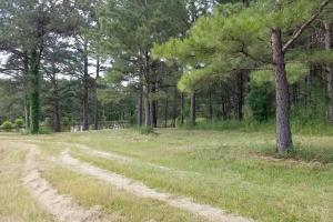 Stills Cross Roads Hunting, Timber, Potential Home Site  in Pike, AL (12 of 25)
