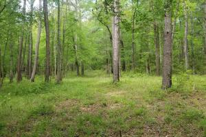 Stills Cross Roads Hunting, Timber, Potential Home Site  in Pike, AL (4 of 25)