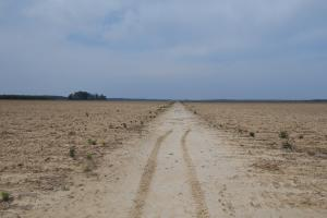 Morgan City Irrigated Farmland - Leflore County MS