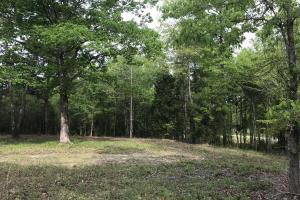 Numerous Wildlife Food Plots and Mature, Mast Producing Hardwoods (42 of 48)