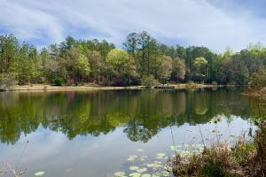 Wolfden Lake Lodge and Timber Investment  - Mobile County AL