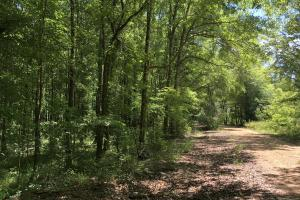 Beaver Creek Big Timber - Amite County MS