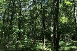 Beaver Creek Big Timber in Amite, MS (2 of 7)