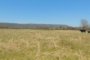 775+/- Acre Ranch at Bottom of Petit Jean Mountain in Conway, AR (2 of 25)