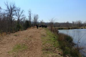 775+/- Acre Ranch at Bottom of Petit Jean Mountain in Conway, AR (20 of 25)