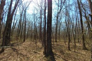 775+/- Acre Ranch at Bottom of Petit Jean Mountain in Conway, AR (14 of 25)