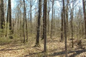 775+/- Acre Ranch at Bottom of Petit Jean Mountain in Conway, AR (17 of 25)