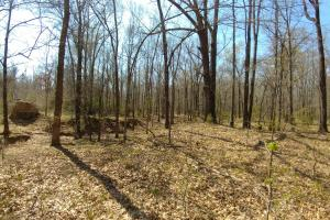 775+/- Acre Ranch at Bottom of Petit Jean Mountain in Conway, AR (18 of 25)
