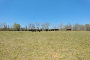 775+/- Acre Ranch at Bottom of Petit Jean Mountain in Conway, AR (22 of 25)