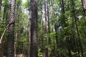 Hunting, Homesite, and Timber Opportunity - Monroe County MS