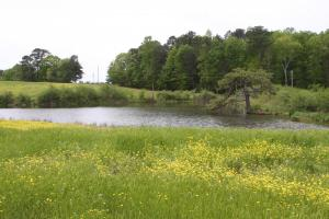 Smith Lake Agriculture/Farm Land - Cullman County AL