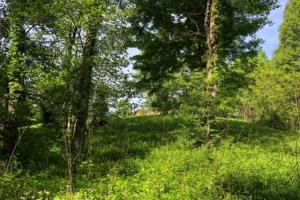 83 Acres with finishable Hunting Retreat in Madison, KY (11 of 33)