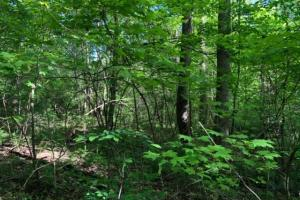 83 Acres with finishable Hunting Retreat in Madison, KY (12 of 33)