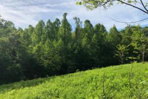 83 Acres with finishable Hunting Retreat in Madison, KY (13 of 33)