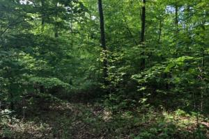 83 Acres with finishable Hunting Retreat in Madison, KY (18 of 33)