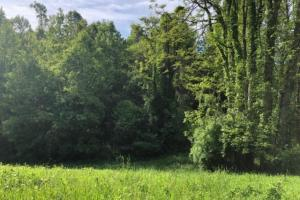 83 Acres with finishable Hunting Retreat in Madison, KY (7 of 33)