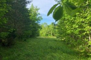 83 Acres with finishable Hunting Retreat in Madison, KY (8 of 33)