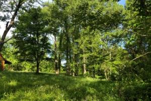 83 Acres with finishable Hunting Retreat in Madison, KY (10 of 33)