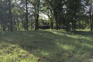 83 Acres with finishable Hunting Retreat in Madison, KY (24 of 33)